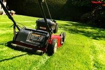 manutenzione verde, giardinieri, giardino specializzato