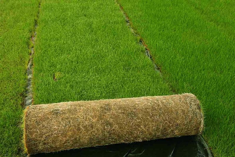 sicil verde a tremestieri tappeti erbosi